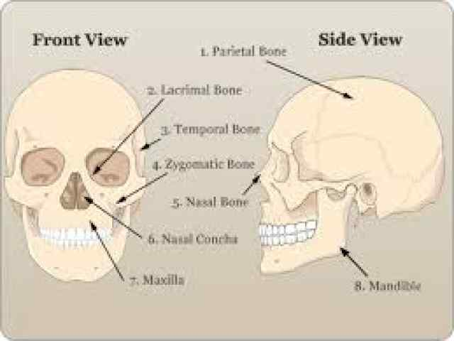 Bones multiple choice questions and answers