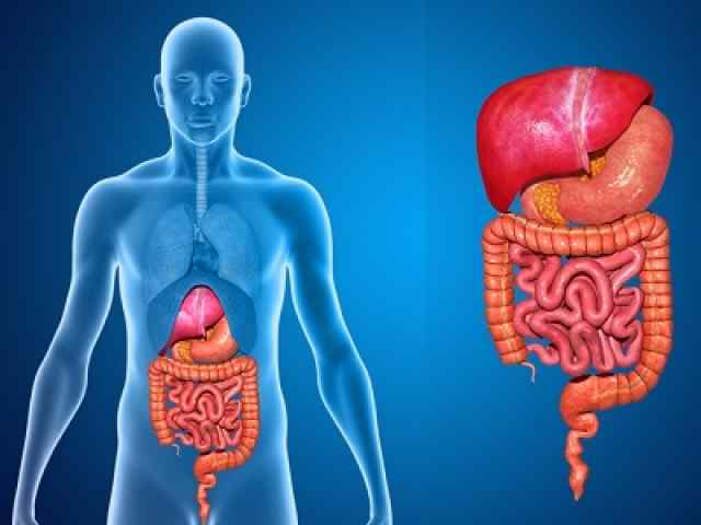 Digestive System multiple choice questions and answers