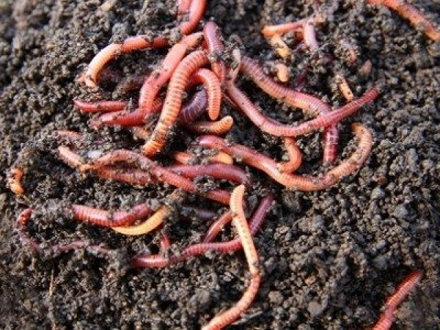 Earthworms multiple choice questions and answers