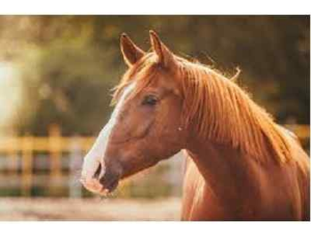 Horse multiple choice questions and answers