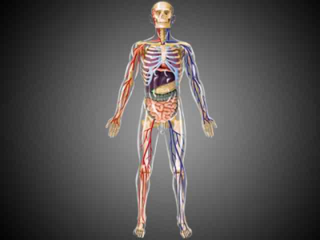 Human Body multiple choice questions and answers