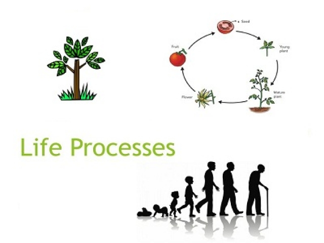 Life Process multiple choice questions and answers