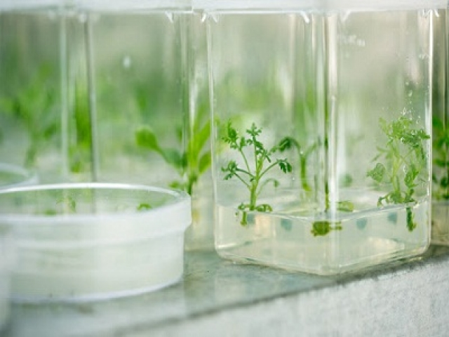 Plant Tissue Culture multiple choice questions and answers