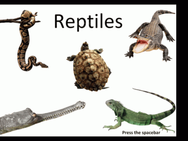 Reptiles multiple choice questions and answers